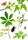 Collection of green leaves and insects Royalty Free Stock Image