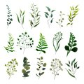 Collection of greenery leaf plant forest herbs tropical eucalyptus leaves Royalty Free Stock Photo