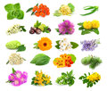 Collection of herbs and flowers Royalty Free Stock Photo
