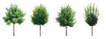 Collection of isolated trees. Royalty Free Stock Photo