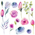 Collection of isolated watercolor pink spring flowers and other plants Royalty Free Stock Photo