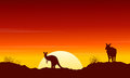 Collection kangaroo at sunset silhouette scenery