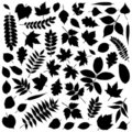 Collection of Leaf Silhouettes Royalty Free Stock Photo