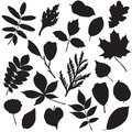 Collection of leaves silhouettes different isolated on white Stock Images