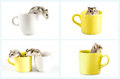 Collection of little hamsters sitting inside a cup Stock Image