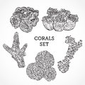 Collection of marine plants and corals. Vintage set of black and white hand drawn marine flora.