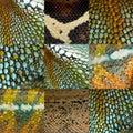 De nueve reptil piel