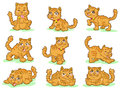 Collection of nine cute kittens Stock Image