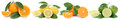Collection of oranges lemons fruits in a row  on white Royalty Free Stock Photo