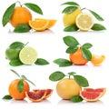 Collection of oranges mandarin lemon grapefruit fruits Royalty Free Stock Photo