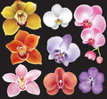 Collection of orchid flower on black background Royalty Free Stock Image