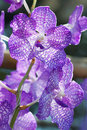 Collection of orchid flower on green back ground, close up orchid flowers Stock Photo
