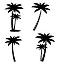Collection of palm trees isolated on white background illustration Stock Photos