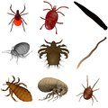 Collection of parasites d renders Royalty Free Stock Photography