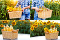 Collection of a pictures of wicker basket with three bottles of