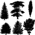 Collection of pine trees Royalty Free Stock Photography