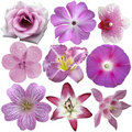 Collection of  pink and purple flowers Royalty Free Stock Photo