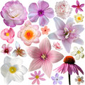 Collection of pink summer flowers Royalty Free Stock Photo
