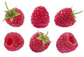 Collection of raspberry isolated on white background set as package design elements Royalty Free Stock Photos