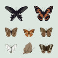 Collection of realistic butterfly insect vector set illustration three Stock Photo