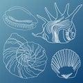 Seashells vector set