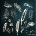 Collection of realistic white feathers for logotypes and label i