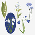 Collection realistic wild flowers Stock Photography
