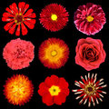 Collection of Red Flowers Isolated on Black Royalty Free Stock Images