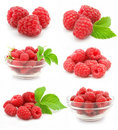 Collection red raspberry fruits isolated Royalty Free Stock Photo