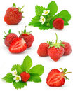 Collection of red strawberry fruits isolated Royalty Free Stock Photo