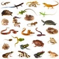 Collection of reptiles and amphibians Royalty Free Stock Photo