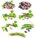 Collection of Ripe Haricot Beans with Seed Royalty Free Stock Image