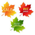 Collection Sale Leaves Royalty Free Stock Image