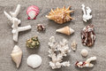 Collection of sea shells assorted om tabletop Stock Image