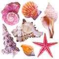 Collection of sea shells isolated on white Royalty Free Stock Images