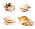 Collection of seashells Royalty Free Stock Photo
