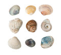 Collection of seashells isolated on white background Royalty Free Stock Photo