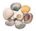 Collection of seashells isolated on white background Royalty Free Stock Image