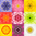 Collection set nine flower mandalas various colors kaleidoscope of concentric full frame background in yellow pink orange blue red Royalty Free Stock Photography
