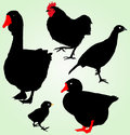 Collection of silhouettes of farm birds Royalty Free Stock Photo