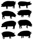 Collection of silhouettes of pigs