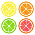 Collection of slices lemon, orange, grapefruit and lime on white background