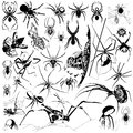 The collection of spiders hand drawing Stock Images