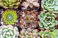 Collection of succulents shoot from above - Flat lay succulent p