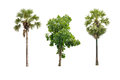 Collection of summer tree Royalty Free Stock Photo