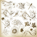 Collection of swirl floral vector elements for design set ornaments and leafs Stock Images