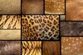 Collection Of Textured - Anima...