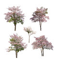 Collection of trees with pink flower isolated on white background Royalty Free Stock Photo