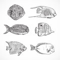 Collection of tropical fish.Vintage set of hand drawn marine fauna.