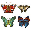 Collection of various kinds of butterflies, on white b